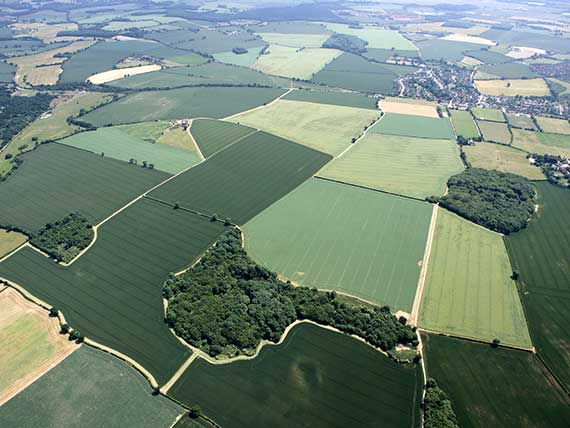 Arial photo of Heartwood Forest