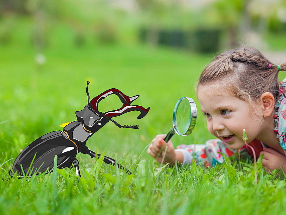 Small girl with magnifying glass looking at stag beetle